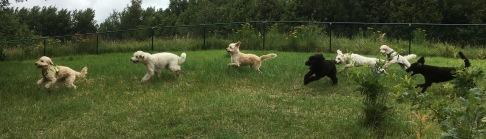Melker, Simon, Pyret, Buddy, Charlie, Mitzy och hebbe