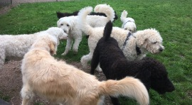 Hundar i bilden är: Pyret, Saga, Charlie, Buddy, Mitzy, Hebbe och Melvin