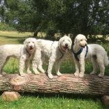 Vårdhundseleven Saga, Vårdhunden Charlie och Läshunden Mitzy en lördag