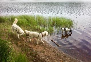 Mingel vid sjön