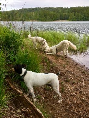 Paus vid sjön