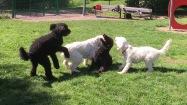 Buddy, Charlie, Hebbe och Saga