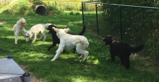 Lek i Rotorps hundrastgård