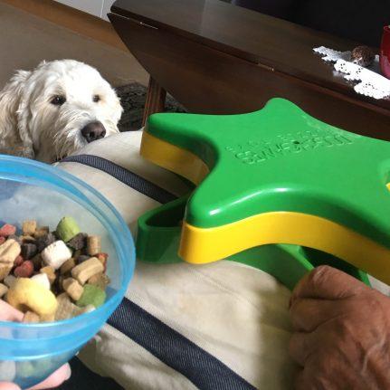 Charlie väntar tålmodigt när det fylls godisar i aktivitetsspelet