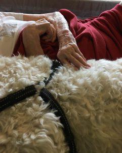 det tröstar och lugnar att ha en hund jämte sig i sängen en stund när man är i livets slutskede.
