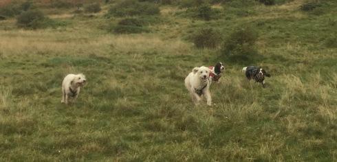 Glada sociala tjänstehundar på ledig dag