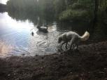 Sienna badar i alla väder, Charlie känner lite försiktigt om han vill doppa mer än en tass...