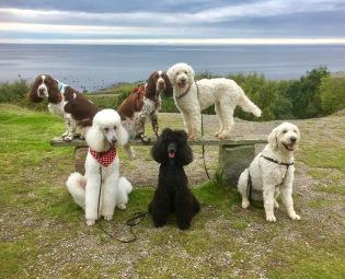 Svea, Hjördis, Saga, Noa, Paris och Charlie poserar denna vindstilla vackra höstdag.