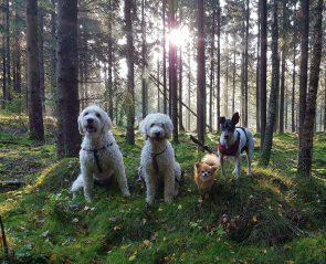 Charlie, Saga, Putte och Pedro