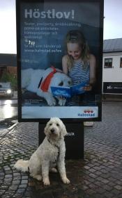 Charlie tar det hela med ro, att han är med på stora och många planscher på många ställen i Hela Halmstad.