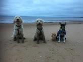 Skön kvällspromenad med Pedro och Putte. Charlie och Saga fick bada efter denna runda...