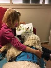 Läshunden Charlie lyssnar på bok om hästar.