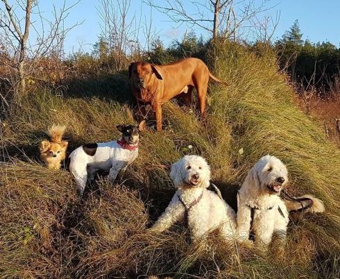 Vackra hundar i höstsolen
