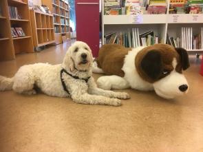 Läshundar på bibblan i Laholm. Charlie och Saga var inte ensamma om att vara hundar på biblioteket idag...