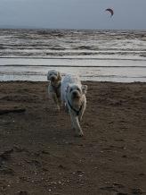 Frihet och lek på stranden