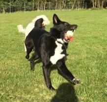 Bosse är lycklig med sin boll