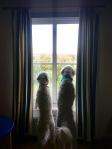Saga och Charlie tittar ut över slottsträdgården