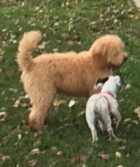 Dagens yngsta, Pippi och Lucy, 4 respektive 5 månader.