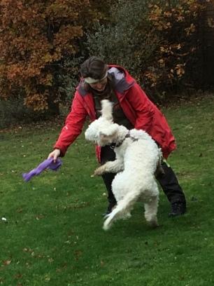 Vi leker mycket!! Roliga lektioner med Dogz.