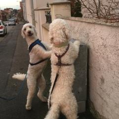 Mitzy och Saga med tassar på elskåp