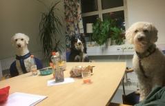 Vovs hade möte och pratade lite planering för 2018. På bilden: Dagens medverkande hundar Mitzy, Harry och Saga.
