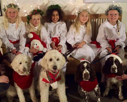 Lussetåg, Halmstad 2017 med lucior och hundar