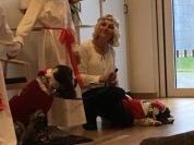 Lussande Svea hundteam, de kan följas på Facebook