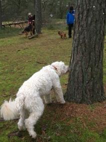 Leta mjukost på träd. Högt och lågt