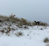 Polare på dynen