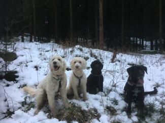 Charlie, Saga, Bella och Sienna