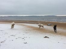 Vinter på stranden