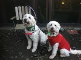 Vårdhundarna Charlie och Saga <3 Vi tackar för vi fick vara med idag! Det var skoj!!