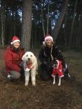 Julinspirerade mattar med juliga hundar på Adventspromenad med Tassrundan
