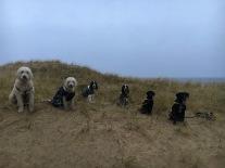 Hundarna väntar på att få leta godis.