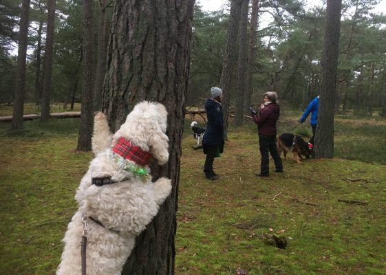 Charlie är impad av träden på Hökafältet. Det växer mjukost på barken, nämligen!