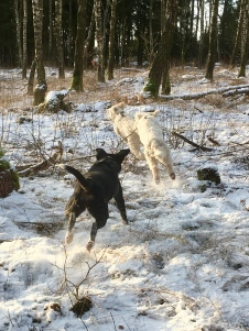 Saga har täten, Charlie och Nova jagar henne.