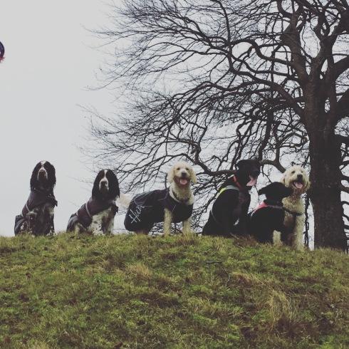 Årets sista promenad med vännerna Hjördis, Svea, Saga, Sienna, Bella, och Charlie