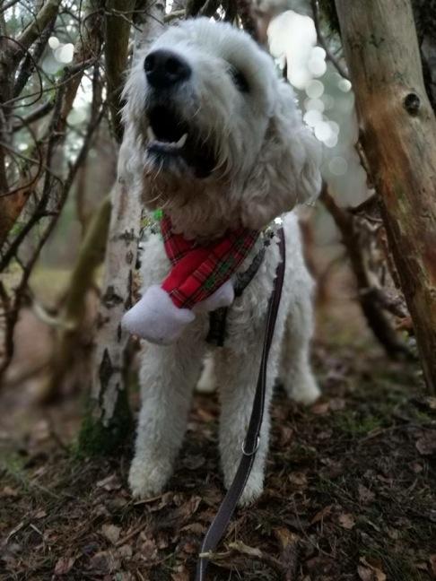 Charlie är julfin i skogen och som det verkar, nöjd med livet