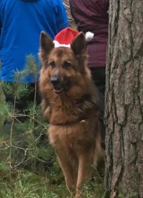 Fina Palle, gammelgubbe (11år) som ser ut som en unghund <3