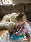 Här får hundarna hjälp av vårt äldsta barnbarn att öppna sin kalender med hundchoklad