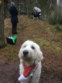 Charlie väntar på sin tur, bra passivitetsträning också på aktivitetsrundor =)