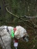 Charlie har hittat en godsgömma i buskarna. Han var mycket nöjd med fyndet!