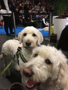 Läshunden Mitzy och vårdhunden Saga