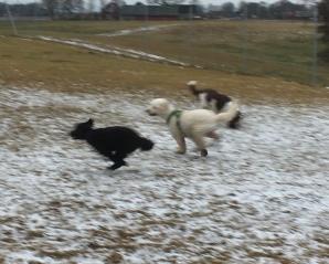 Bella och Mitzy lekte mycket