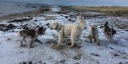 Polare på stranden