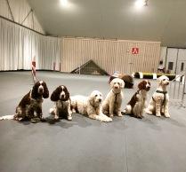Hjördis, Svea, Charlie, Saga, Ozze och Saga i Halmstad hundarena.