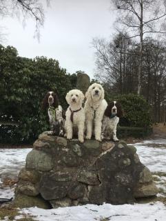 sociala tjänstehundar på Galgberget