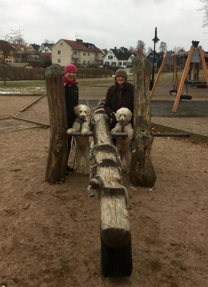 Dogparkour i Stadsparken, Laholm