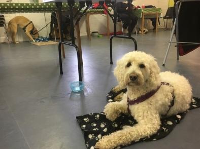 Vårdhunden Saga