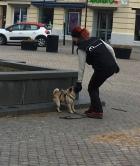 Lilly, som leder promenaden, visar med sin hund att backa upp